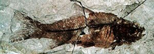 fish_florissant_fossil_beds_wide